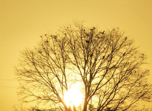 Sun Photography Dnyneshwar Muley 4