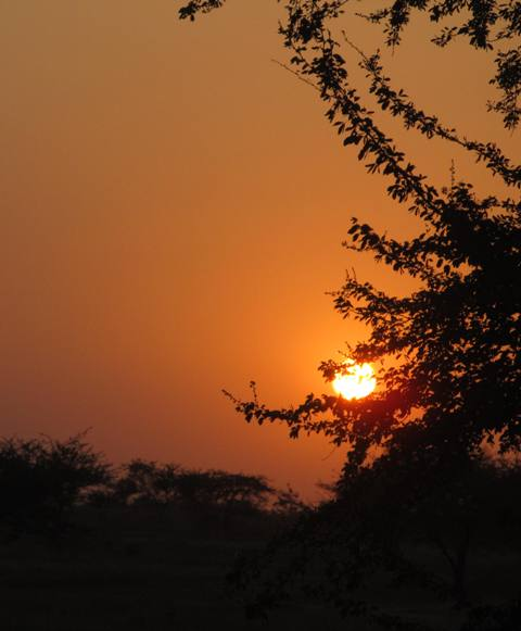 Earth-Day-Sun-Set Photography-Zero-Creativity.jpg