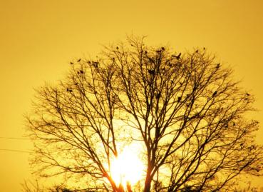 Nature-Earth-Photography-Dnyneshwar-Muley