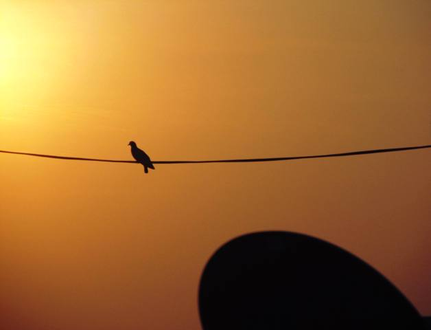 Birds-Silhouette.jpg