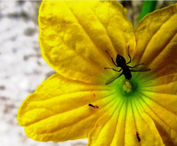 Creative-Flower-Photography-Kaas-Pathar.png