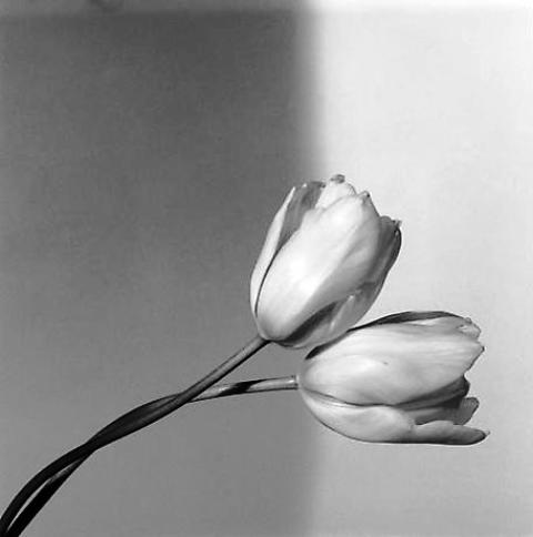 Robert-Mapplethorpe-Flowers.jpg