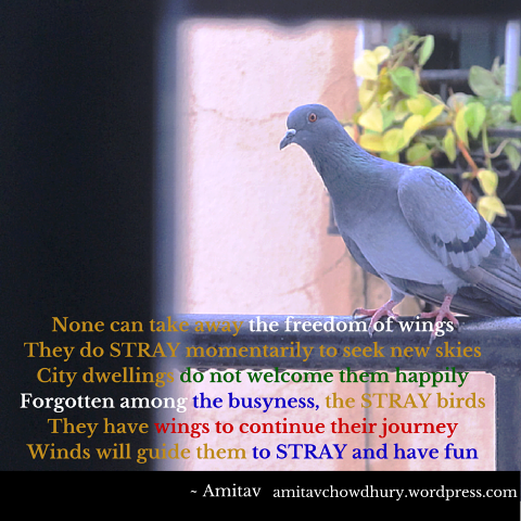 Stray-Birds-Photo-Poetry-Amitav.png