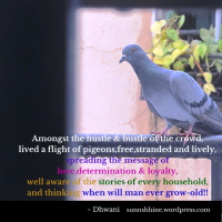 Requesting Photo Poetry on Stray Birds