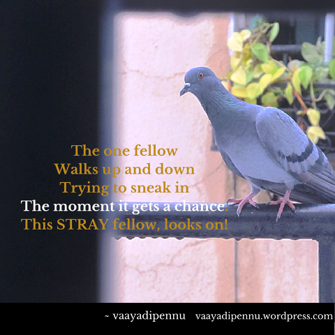 Stray-Birds-Photo-Poetry-Pennu