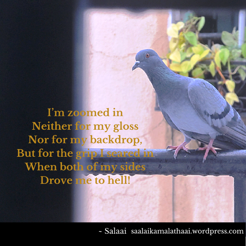 Stray-Birds-Photo-Poetry-Salaai