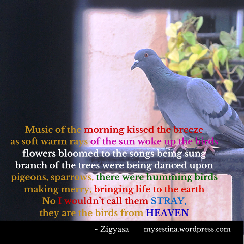 Stray-Birds-Photo-Poetry-Zigyasa.png