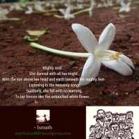 Announcement #6 : Photo Poetry on Flower Photography